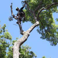 Cape & Island Tree Service LLC 7